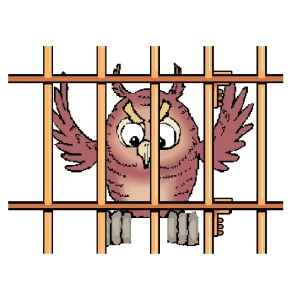jailedowl