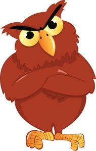 Owl Angry